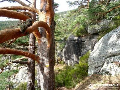 Siete Picos:Senda Herreros,Camino Schmid(Schmidt); turismo de senderismo; visitas alrededor madrid